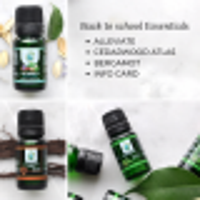 Back to School Essentials Kit (3 oils)