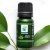 Oregano 100% Pure Essential Oil (Therapeutic)